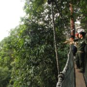 Mount Kinabalu Canopy Walk at Poring
