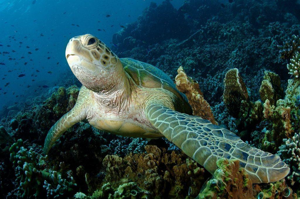 Sipadan island sabah borneo naturalis expeditions - Sipadan dive centre ...